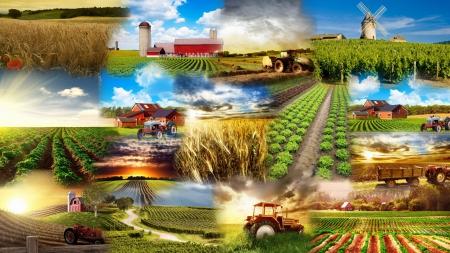 Apuesta incondicional por el medio rural