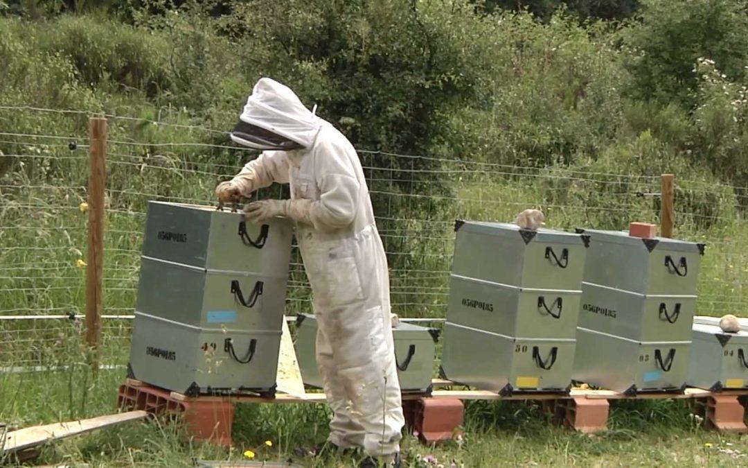 Caso de éxito: Erebia, miel sobre hojuelas